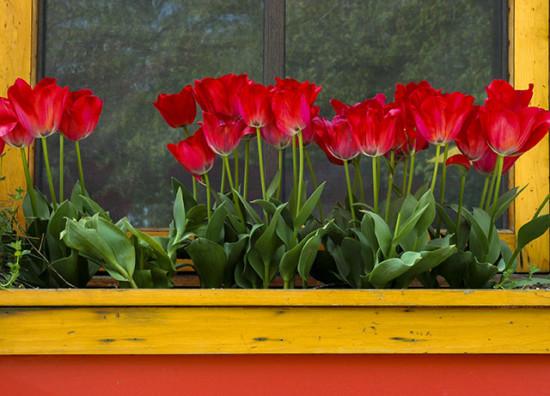 Red Flowers Window Box